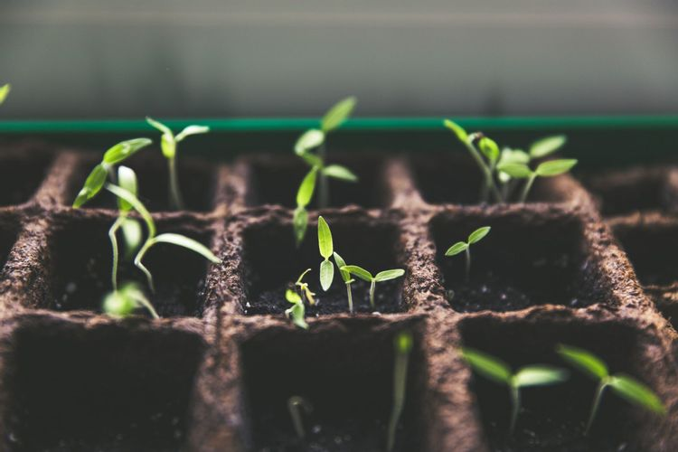 plant-growth-green-markus-spiske